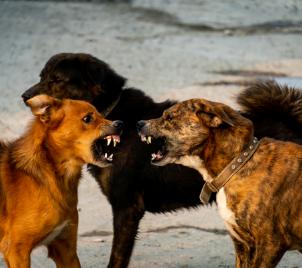 Řešení problémového chování u psa