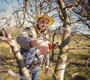Kurz péče a ořezu ovocných stromů